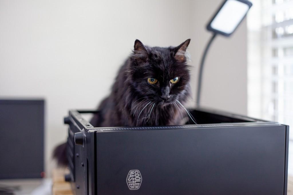 Kiki FelinePC Cat